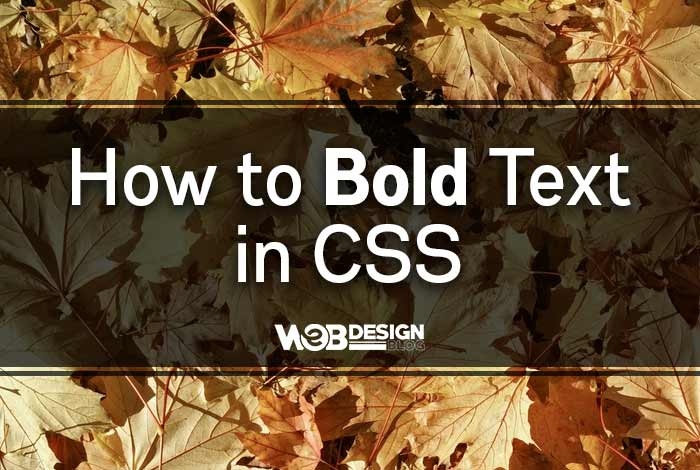 How to Bold Text in CSS